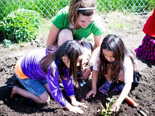 Students transplanting seedlings