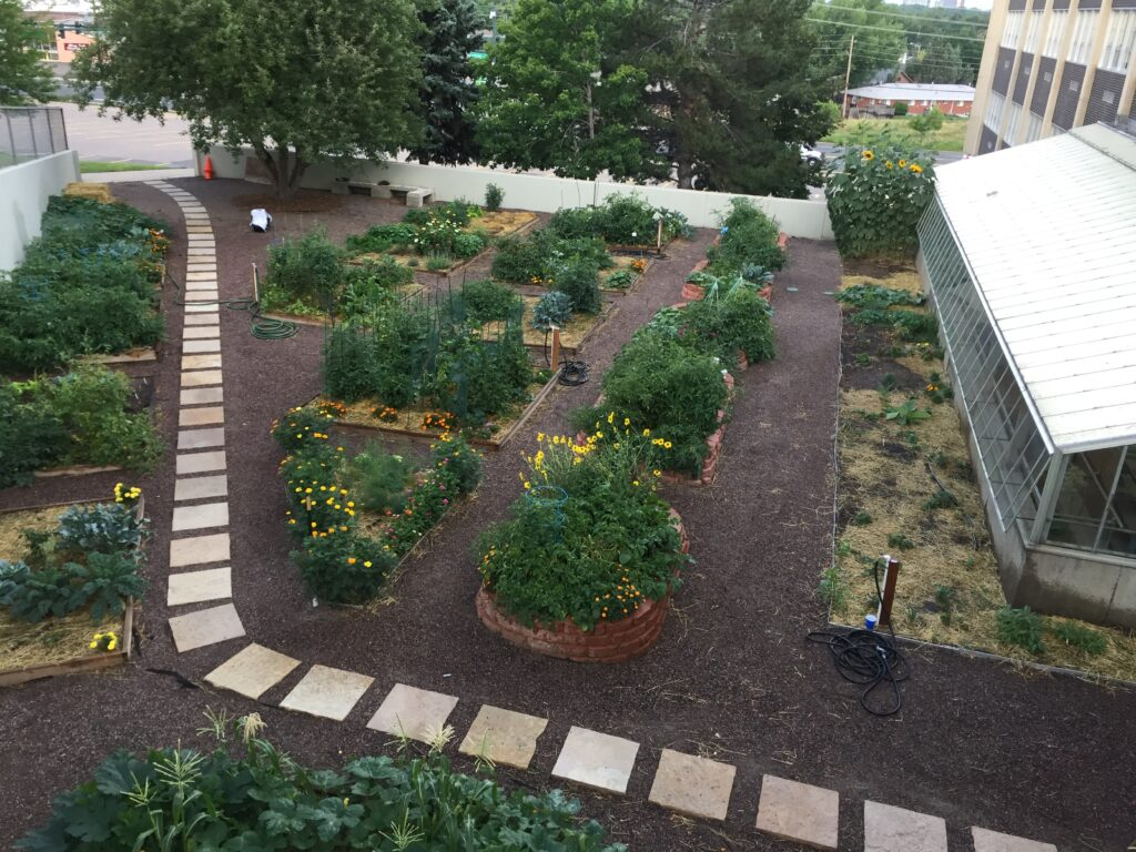 Garden at George Washington HS in late July