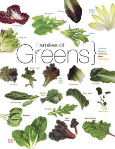 Slow Food Greens Chart