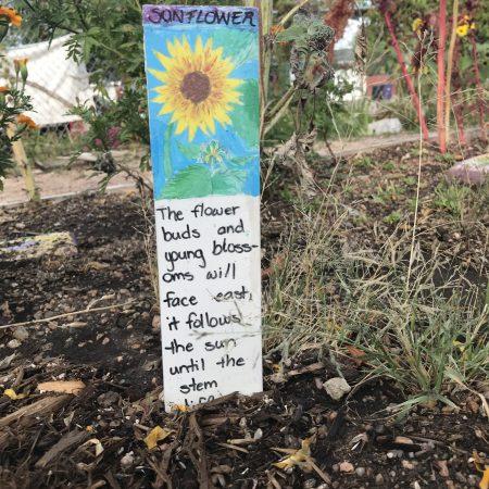 Each One Teach One Sunflower in Garden