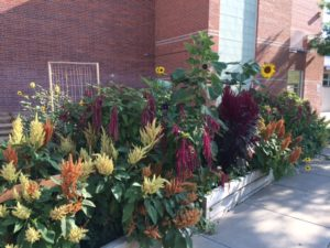 Tall multi-color flowers at the Manual garden