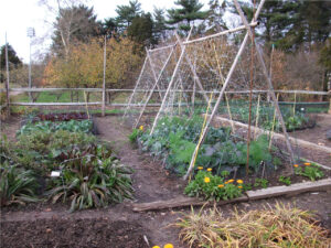 A backyard garden provides food security and a connection to nature.